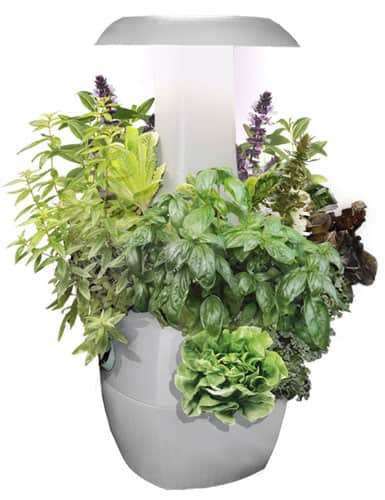 Root Smart Indoor Plant Growing System: Is It Worth the Price ...